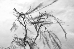 Aus der Serie »Wind«, 2018 - 2020, Fotografie, 30 x 45 cm